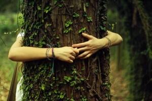hug-a-tree-300x200