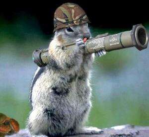 squirrelsniper