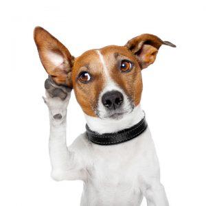 dog-listening